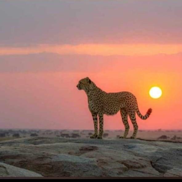 Tracey Safari - Explore Tanzania with Us